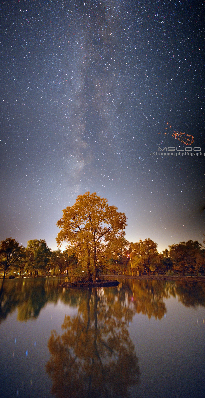 胡杨林银河之二-l.jpg