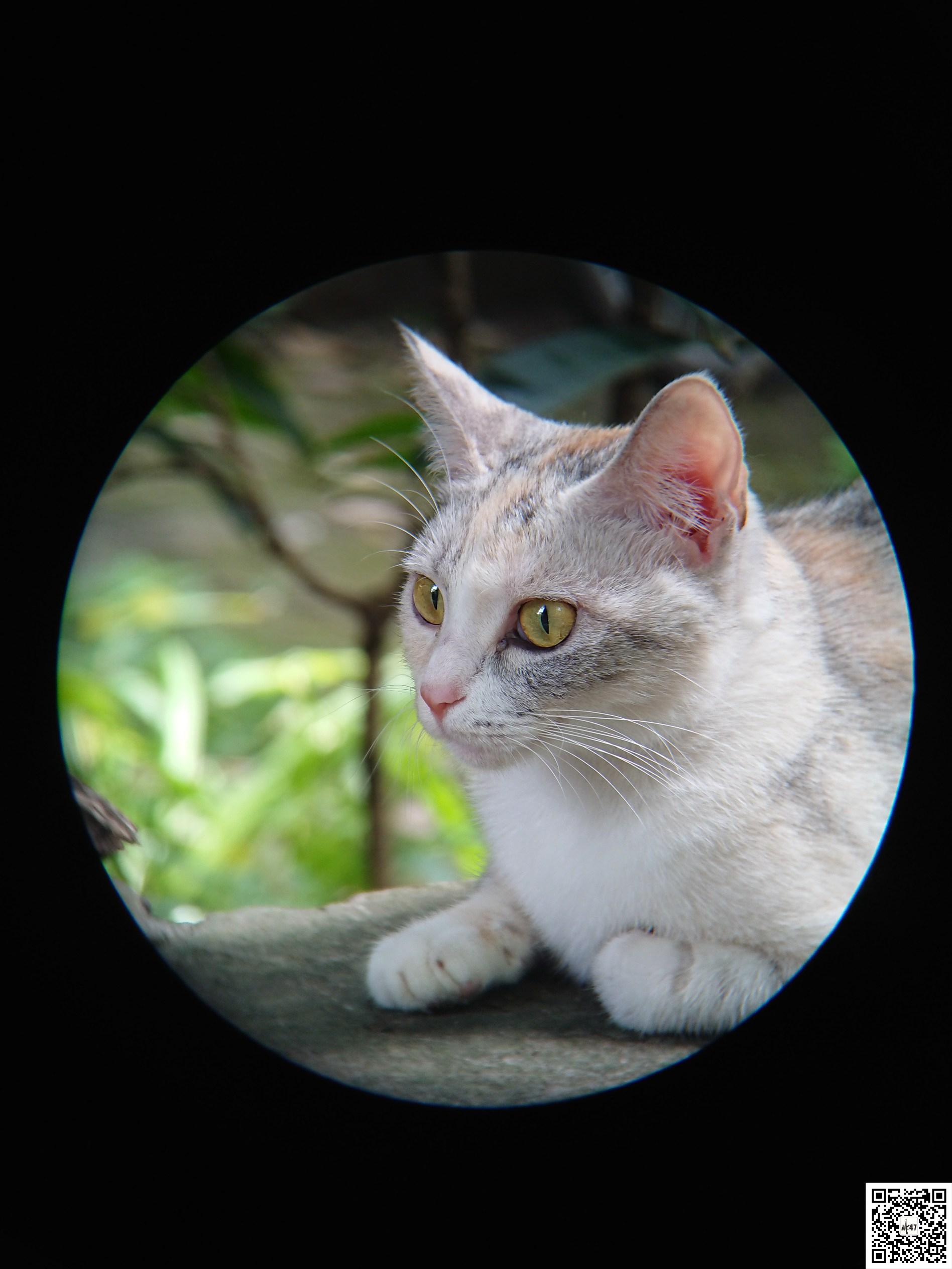 猫猫1.jpg