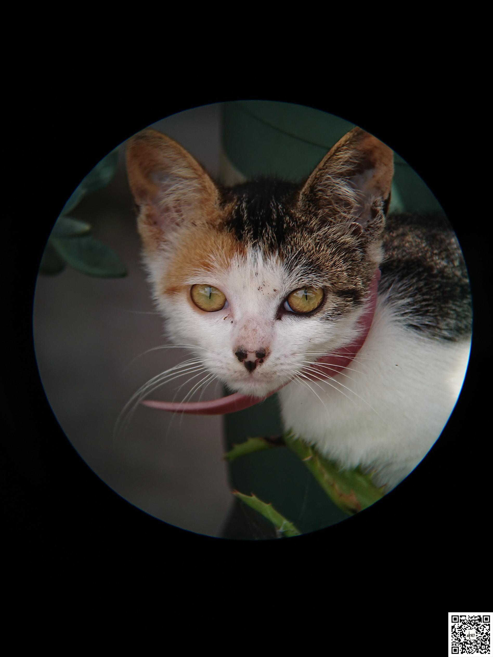 猫猫2.jpg